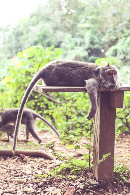 Ubudin pyhä apinametsä