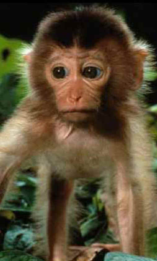 Baby Monkey cuadernodelopinionista