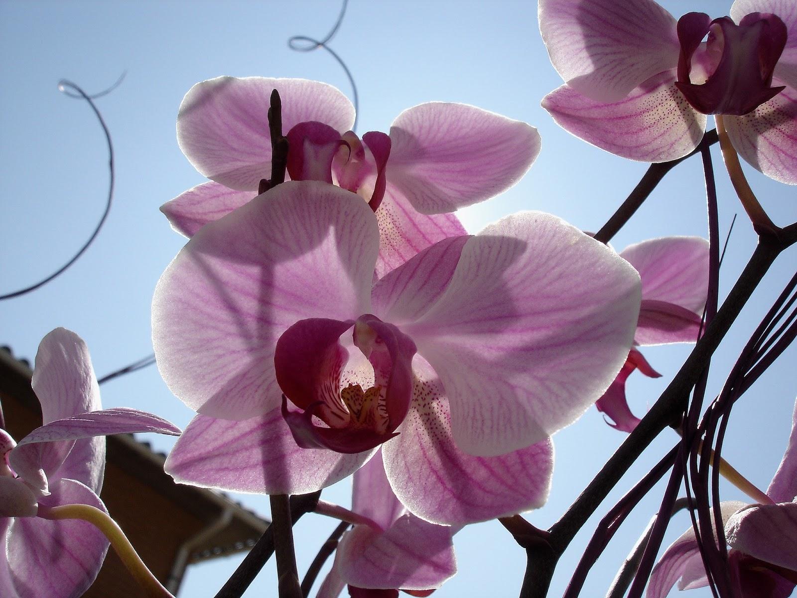 Orquídeas ao sol, ilustra a seção sobre textos das linhas de Tung Jen / Comunidade com os Homens, um dos 64 hexagramas do I Ching, o Livro das Mutações