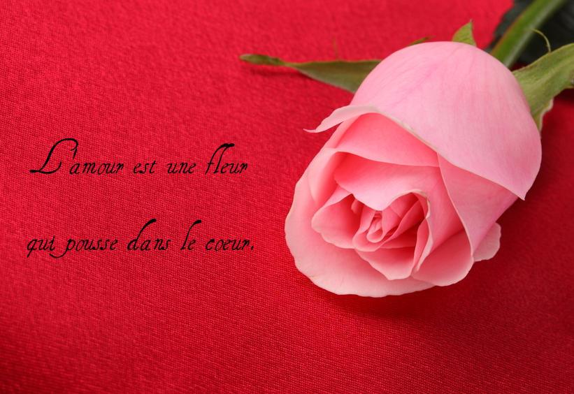 Message d'amour: L'amour est une fleur