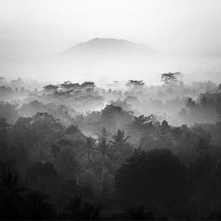 Paisaje blanco y negro- selva