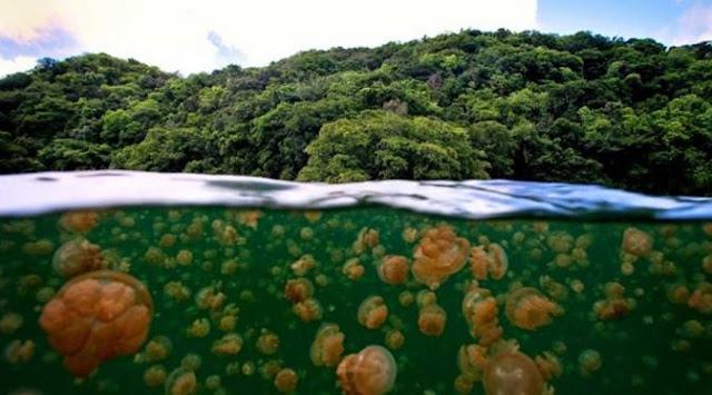 Danau Ubur-ubur Haji buang