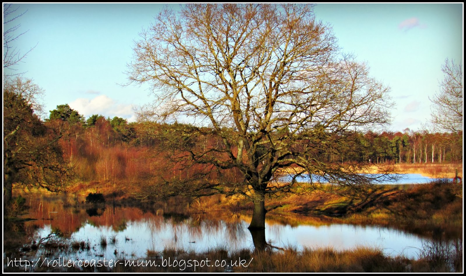 winter tree reflections