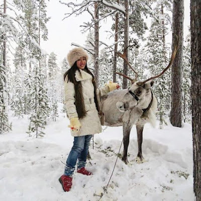 麋鹿,驯鹿,北极圈,俄国,俄罗斯,摩尔曼斯克