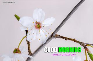 good morning beautiful flowers greetings
