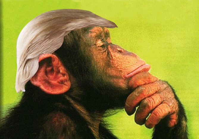 Trumpanzee-thinking.jpg