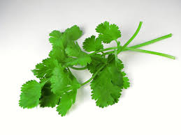 coriander(hara dhanya) health benefits in urdu
