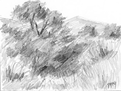 art sketch pencil graphite landscape nature bush