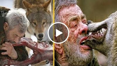 بالفيديو الرجل الذئب حقيقة وليس خرافة وتم تصويره بالفيديو وكيفية أكله ونومه مع الذئاب