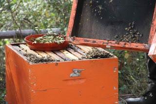 Ξεκίνησαν οι αιτήσεις για δράσεις ενίσχυσης μελισσοκομίας