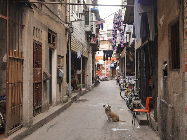 dog sitting on Gudesi Road (古德寺路) in Wuhan