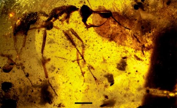 Científicos encuentran una 'hormiga del infierno' (FOTOS)