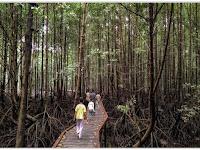Lebih Dekat dengan Flora dan Fauna Indonesia di Taman Nasional Kutai