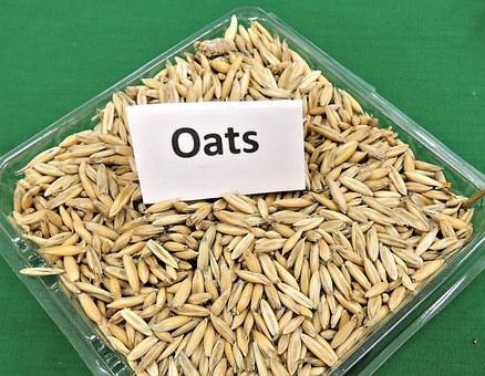 Is eating oatmeal good for weight loss?