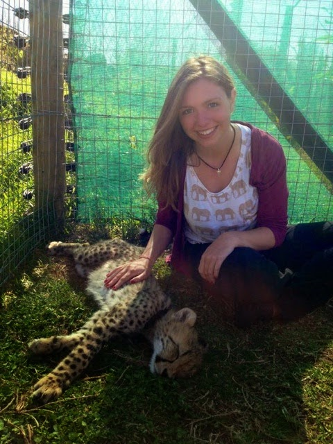 volunteer and cheetah