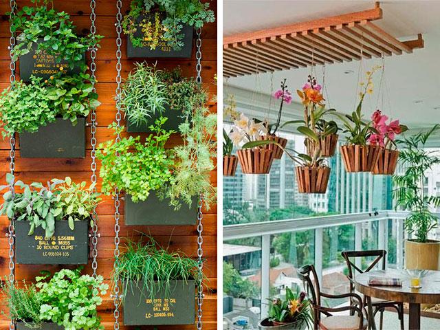 ideias de plantas suspensas