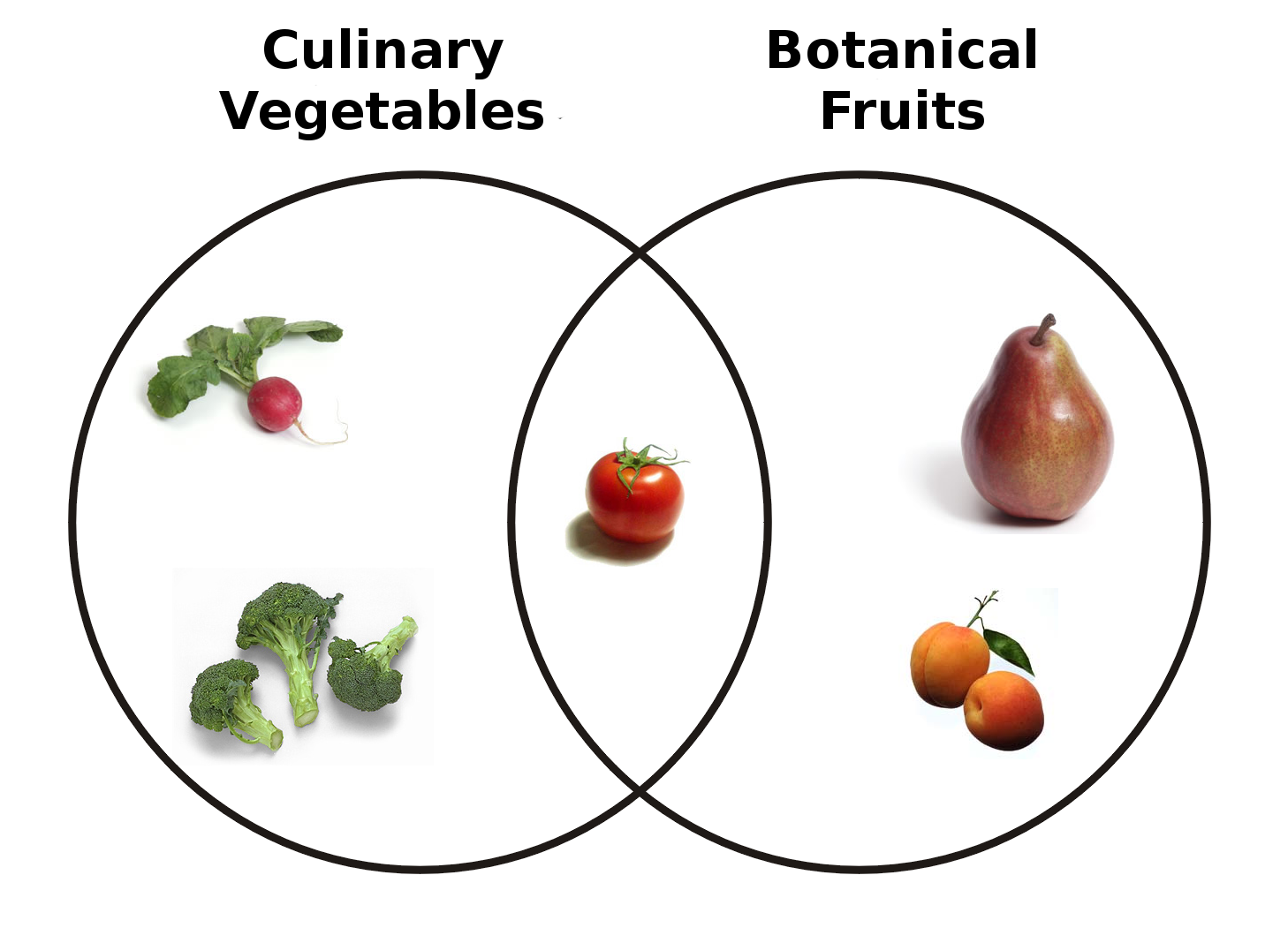 small resolution of the poor old tomato looks pretty lonely in this diagram