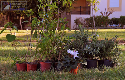 Repairing winter damage to our garden plants