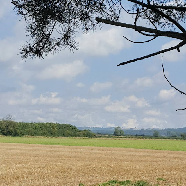 summer view over yorkshire fields