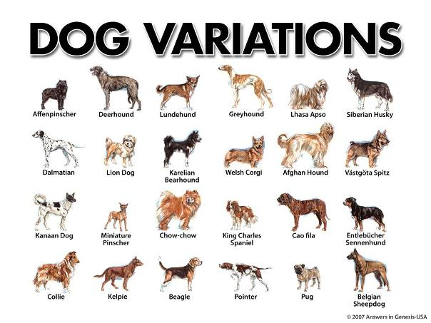 every thing about Dogs - general information