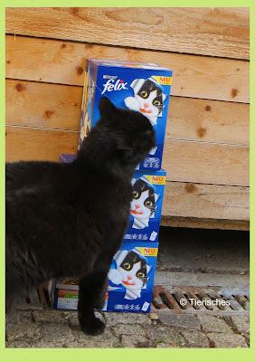 Katze mit Futter