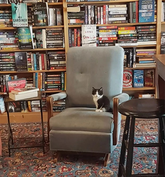 Canadian Bookstore Is Full Of Cute Little Kittens That Customers Can Adopt