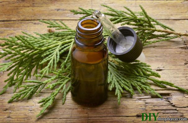 Làn da bạn phù hợp với tinh dầu dưỡng da nào?