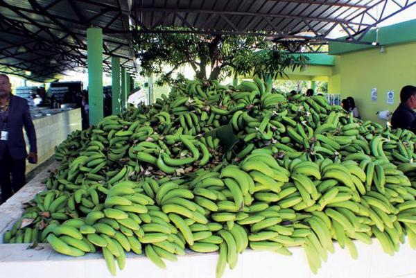 Banano y cacao orgánico generan US$300 millones a RD