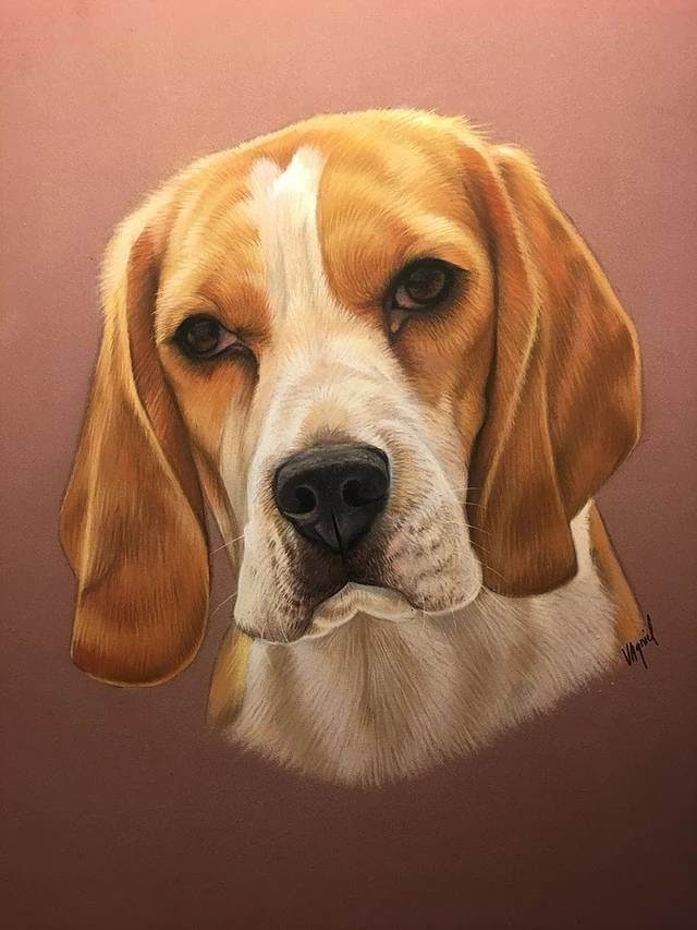 04-Beagle-Virginie-Agniel-Pastel-Drawings-of-Cats-and-Dogs-www-designstack-co