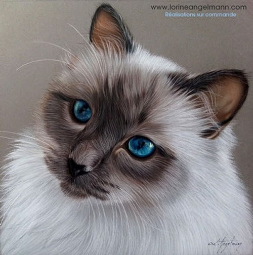 07-Siamese-Cat-Lorine-Angelmann-Cool-Realistic-Animal-Drawings-www-designstack-co