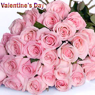 Romantic Pink Roses on Valentines Day Images