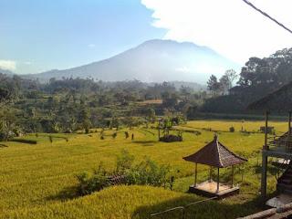 Inspirasi bagi warga desa bisa datang dari mana saja, tak terkecuali dari fenomena yang dimiliki sejak 1920-an dan Pak Putu Gede Asnawa Dikta adalah seorang mahasiswa yang berusaha merevitalisasi keunggulan tersebut. Hanya dalam kurun waktu selama 4 tahun saja, ia telah berhasil merealisasikan programnya pada sektor primer (pertanian) dan sektor tersier (pariwisata).   Saat ini, Masyarakat di Desa Sibetan, Kabupaten Karangasem, Bali, berani memPROKLAMIRkan daerahnya sebagai wilayah AGROWISATA BARU di Pulau Dewata. Bahkan mereka juga telah mampu mengolah buah salak menjadi beragam kebutuhan panganan, mulai dari manisan, dodol, keripik, sirup, caramel, hingga produk kopi. Serta dari sekian jenis olahan, salak pun bisa menghasilkan minuman khas dari Budaya Italia dan sejak tahun 2013, mereka sudah mengekpor produk tersebut ke Eropa.   UNIK-nya lagi! Anda dan para wisatawan yang datang, TIDAK akan pernah menemukan HOTEL disana. Jadi, setiap masyarakat desa siap memberikan fasilitas home stay (rumah singgah) dan paket field trip (jalan-jalan berkeliling desa), serta menghadirkan khasanah budaya Pulau Dewata pada setiap perjumpaan. . . . . . . Wow, Menarik sekali tampaknya.