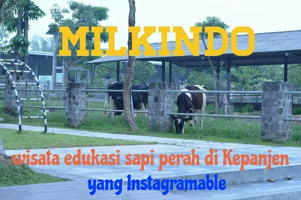 Milkindo : Wisata Edukasi Sapi Perah di Kepanjen Malang yang Instagramable