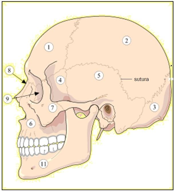 artroza deformantă a articulației talacaneale)