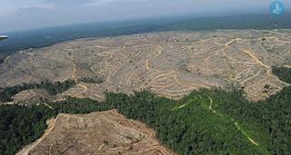 Μόνο 1300 αιτήσεις αντιρρήσεων για τους δασικούς χάρτες στην Ηλεία: