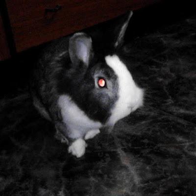 Homenaje conejo baloo