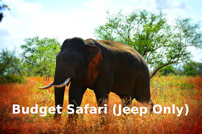 udawalawe_national_park_budget_safari