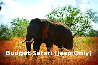 Budget Safari in Udawalawe National Park