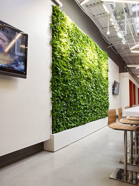Gsky Living Green Walls: Sportmondo Sports Portal: Cannondale Spruces Up New