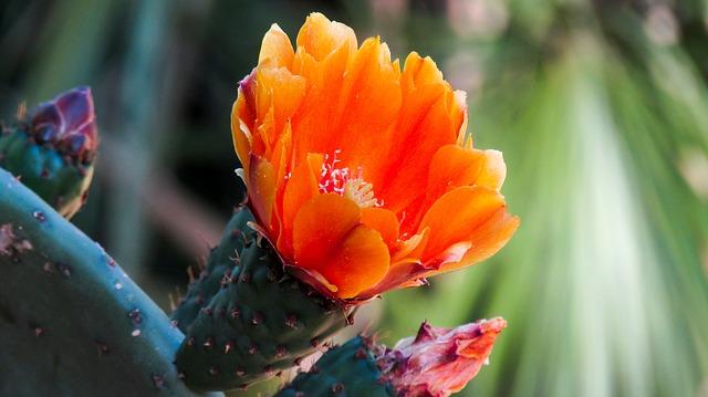 xuong rong no hoa dep nhat 5
