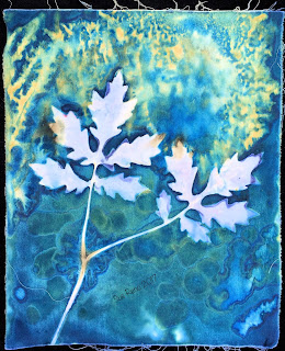 Wet cyanotype, Sue Reno, Image 50