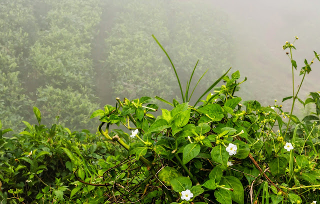 Flowers picture with a background when mist was setting in - Coonoor