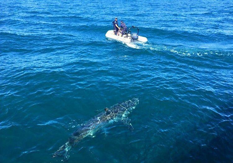Kurtarma botu nihayet gelmişti, biraz daha geç kalsalardı köpek balıklara yem olacaktı.