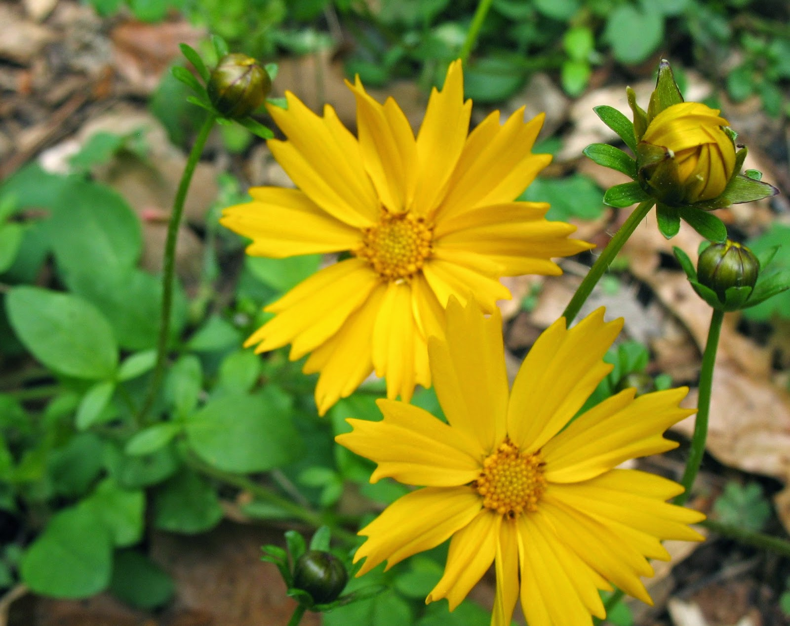 Georgia Garden: Using Georgia Native Plants: Awesome, Easy, Native