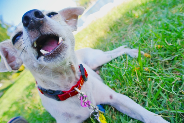 Good Natural Chews For Dogs