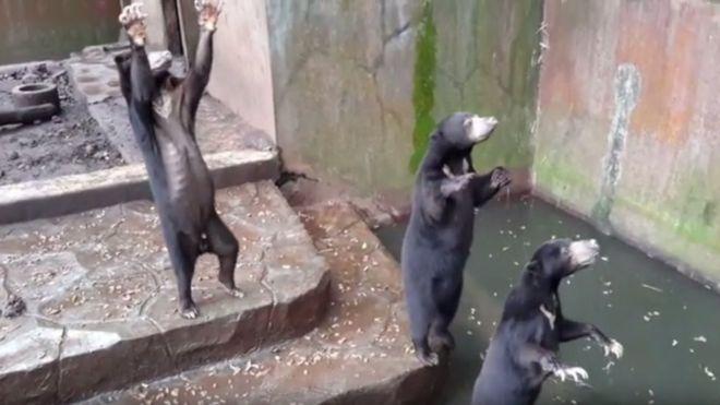 "Beruang ""Kelaparan"" di Kebun Binatang Bandung yang Menarik Perhatian Dunia"