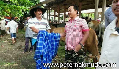 jual beli di Pasar hewan Ternak Muaro Paneh