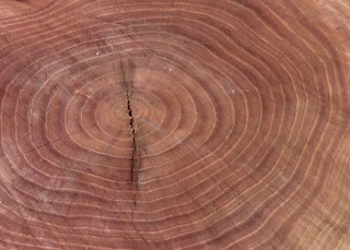 Tree annual growth rings