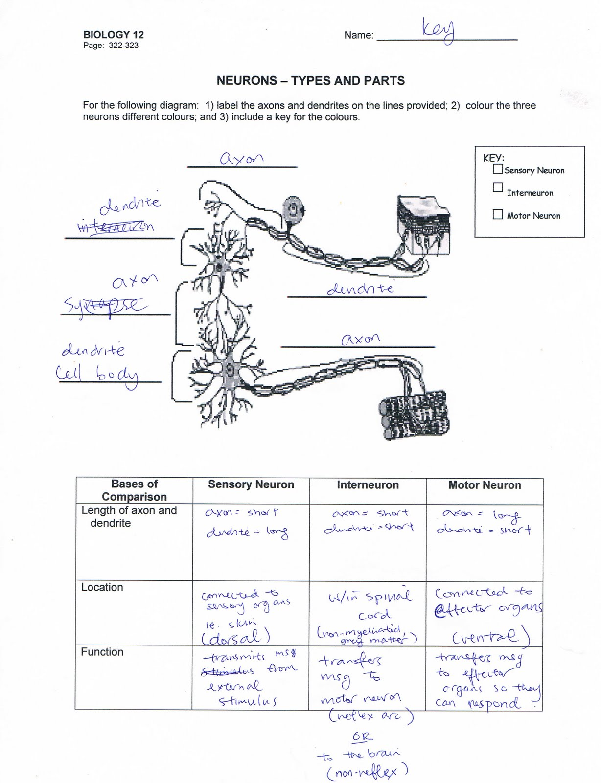 New Chemistry Periodic Table Worksheet Ii Answer Key