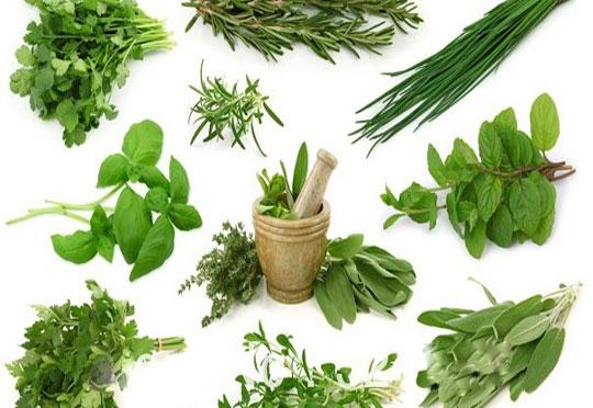 Tanaman Herbal Ampuh Mengobati Asam Urat